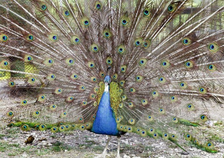 Геранеа – уникален екопарк с диви животни