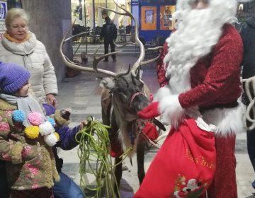 """Северният елен Рудолф от парк """"Лапландия"""" гостува в Добрич"""