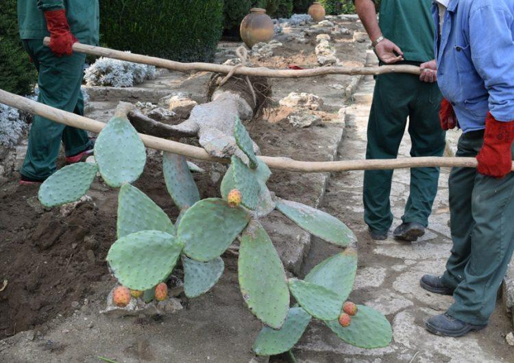 Прибраха на закрито ценните кактуси в Ботаническата градина край Балчик