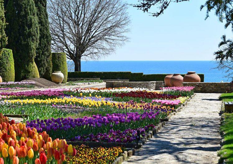 50 000 луковици лалета са засадени в Ботаническата градина край Балчик